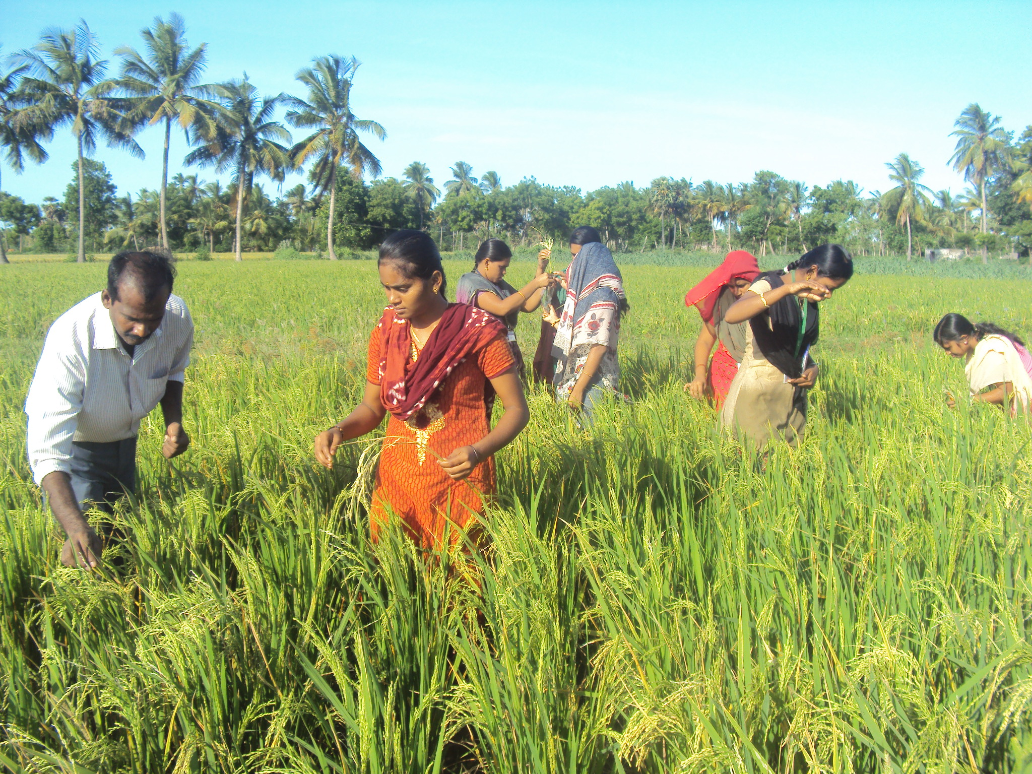 Crop Cultivation