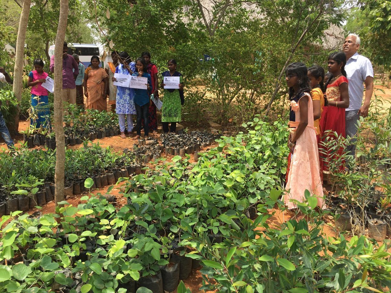Nursery Raising at Kolunji Ecological Farm
